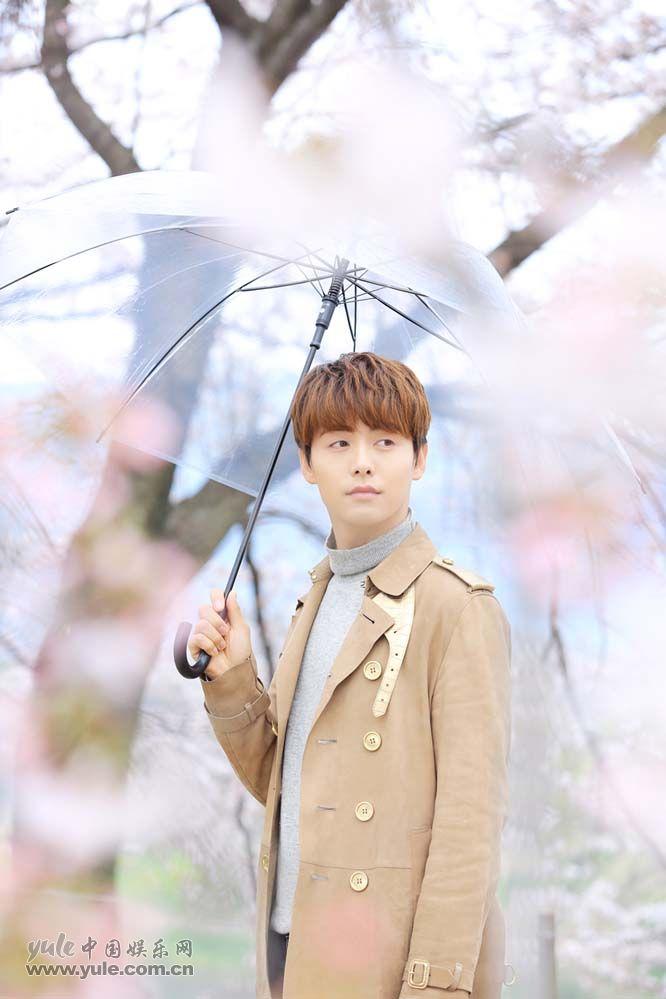 樱花般的少年